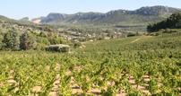 bandol cassis wine tour