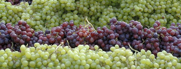 Can White Wine Be Made From Red Grapes?