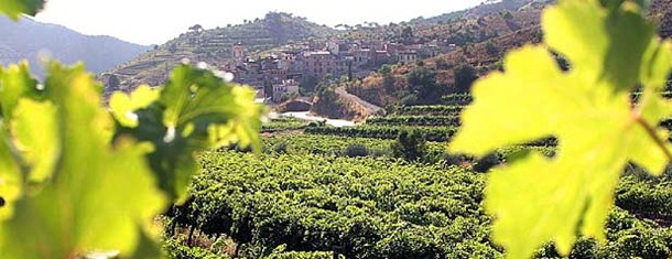 Priorat – the other Spanish DOC