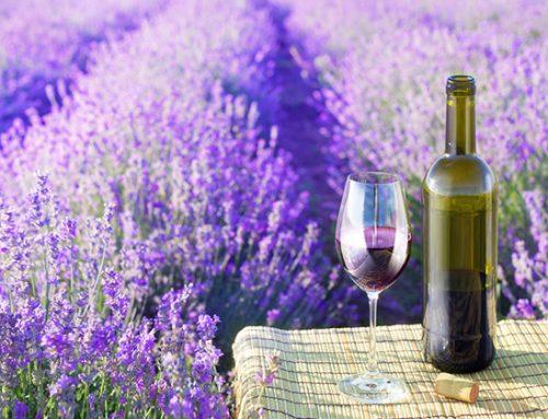 Wine in Provence featured in Tripadvisor subsidiary, Cruise Critic.